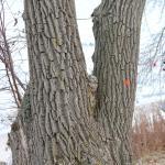 Interesting Tree...