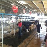 Milking station
