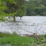 Waterbird santuary