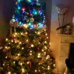 Bindon Bottom Christmas