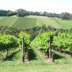 Grape & Graze Mornington Peninsula Winery Tours