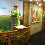 Sugar Beet Gallery