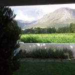 overlooking the vines