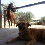 dogs and horses! what more could you need?!