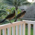 Birds that visited our deck