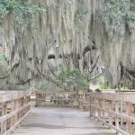 Fort Frederica: Wooden pathway