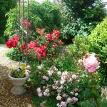 Garden in rose time