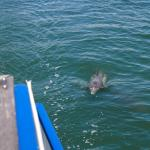 Dolphin right next to us