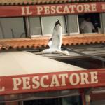 Photo de Il Pescatore