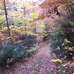 Pleasant Mountain 33 acres of hiking