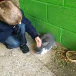 Very friendly rabbits