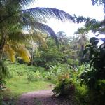 view from Banyan Cottage