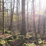 Toller Wald zum Spazierengehen
