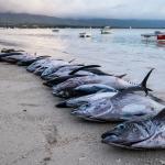 Fish on the beach