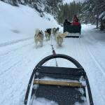 View as passenger from dogsled