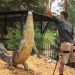 Crocodile show