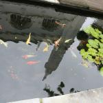 Koi pond behind the cathedral