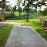 King Cobra crawling across the Buggy Track
