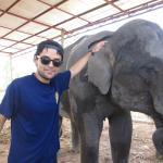 Tour con elefantes.
