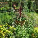Summer garden at Strawberry Cottage