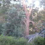 Fairy Park, Anakie - Lovely Bushland Setting - 2010 & 2011