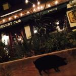صورة فوتوغرافية لـ Succulent Cafe