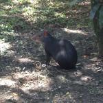 Un animalito que se puede observar en el jardin