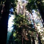 Muir Forest