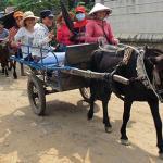 Bao Duyen Tourist - Day Tours