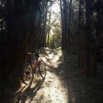 Nearby mountain bike trail