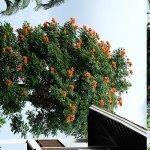 Blick auf Tulpenbaum