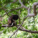monkeys from my balcony
