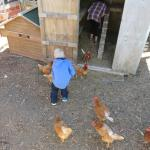 Meeting the friendl chickens