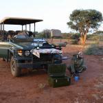 parada durante safari