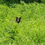 junger Schwarzbär