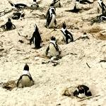 Penguin colony viewing stop
