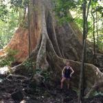 Huge indigenous trees