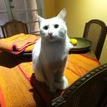 Rescue cat (deaf!)