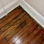 water and mold damaged floors