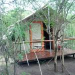 Photo of The Wild Olive Tree Camp