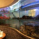A beautiful wall of fish, crab etc to choose from