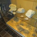 veel fosielen zijn er te zien