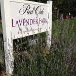 Red Oak Lavender Farm