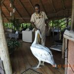 This pelican came to visit us at the lodge.