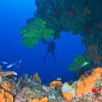 Diving at Shark Shoal
