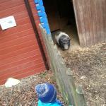 Wildschwein Gehege direkt am Hotel