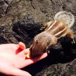 Don't forget to feed the chipmunks down on the beach!