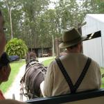 Clydesdale carriage rider.