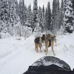 View from the sled.
