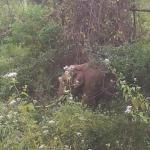 wild elephant near by ..